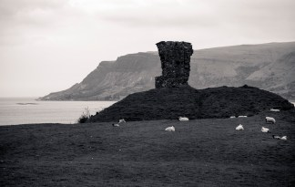 Grazing Sheep; Antrim Coast