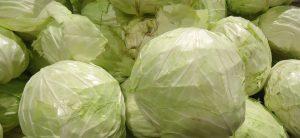 White Cabbage