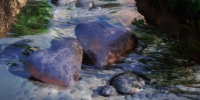 Heart Stream Rox