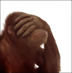 monkey in marketing