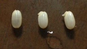 発芽させた玄米