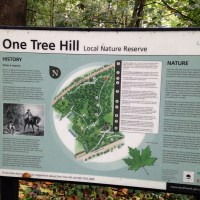 The Road to One Tree Hill: Part 2