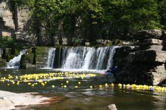 The 2011 Duck Race