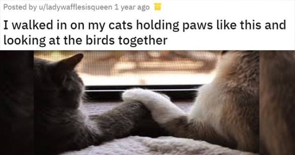 paws cats valentines day cute adorable holding hands animals cat love | reddit posted by ladywafflesisqueen i walked in on my cats holding paws like this and looking at the birds together pic of two cats sitting in front of a window with their paws on top of each other