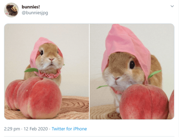 Cute bunnies photos | bunnies bunniesjpg 2:29 pm 12 Feb 2020 Twitter iPhone two pics of a cute little bunny with tan colored fur wearing a pink hat over its ears and posing next to big pink peaches with green leafs attached