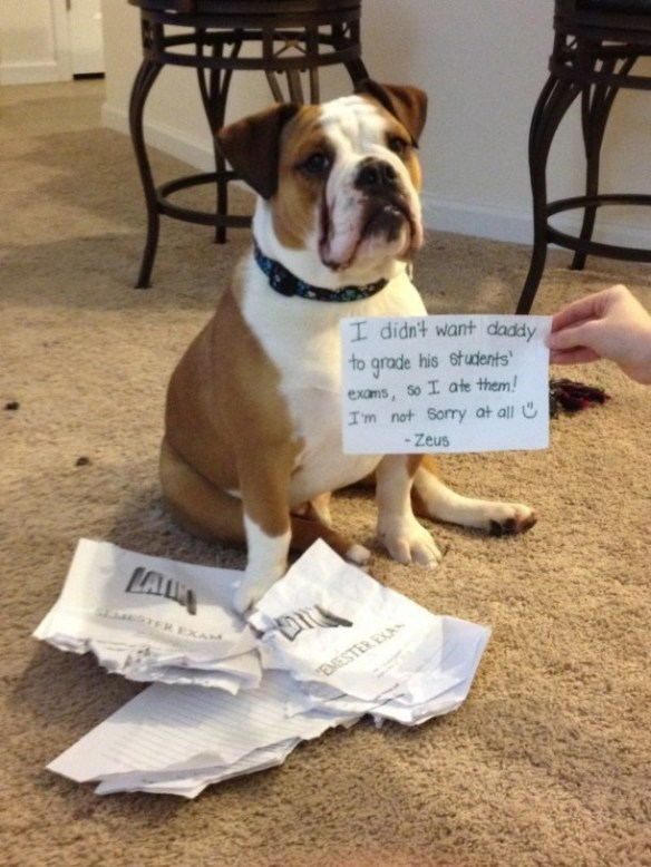 Dog breed - I didn't want daddy to grade his students' exams, So I ate them! I'm not Sory at all U - Zeus EXAM EMESTER EXAN
