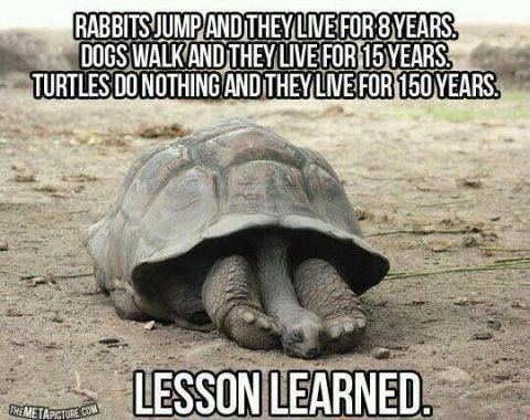 Tortoise - RABBITS JUMPAND THEY LIVE FOR 8YEARS. DOGS WALK AND THEY LIVE FOR 15 YEARS TURTLES DO NOTHING AND THEY LIVE FOR 150 YEARS. LESSON LEARNED. THEMETAPICTURE CO