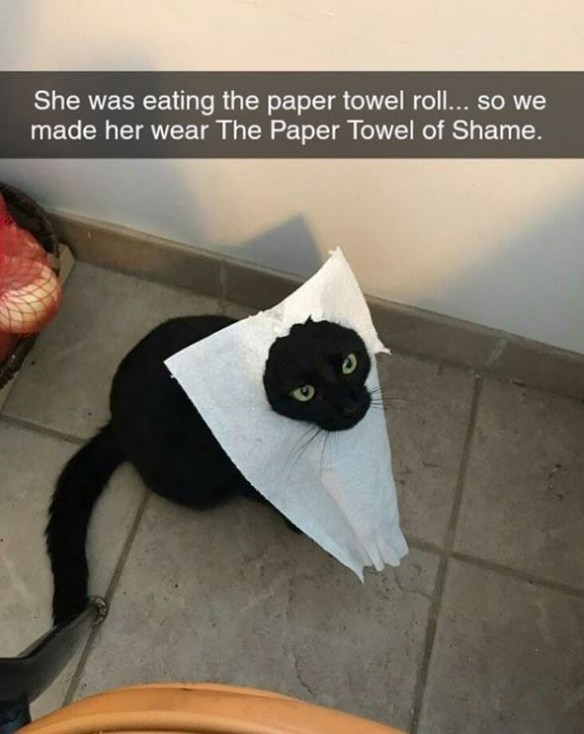 Cat - She was eating the paper towel roll... so we made her wear The Paper Towel of Shame.