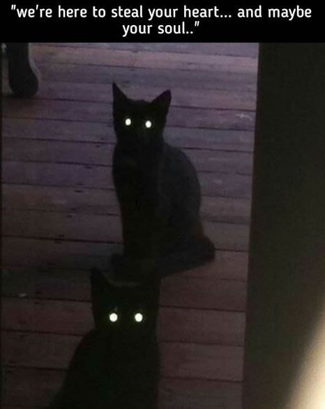 """Cat - """"we're here to steal your heart... and maybe your soul.."""""""