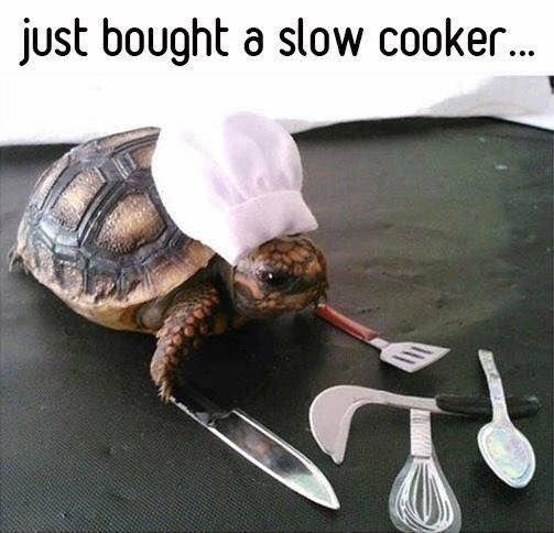 Tortoise - just bought a slow cooker. ...
