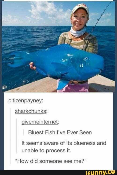 "Fishing - citizenpayney: sharkchunks: givemeinternet: Bluest Fish l've Ever Seen It seems aware of its blueness and unable to process it. ""How did someone see me?"" ifunny.co"