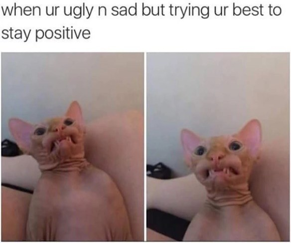 Cat - when ur ugly n sad but trying ur best to stay positive