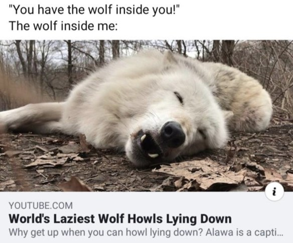 "Photo caption - ""You have the wolf inside you!"" The wolf inside me: YOUTUBE.COM World's Laziest Wolf Howls Lying Down Why get up when you can howl lying down? Alawa is a capti."