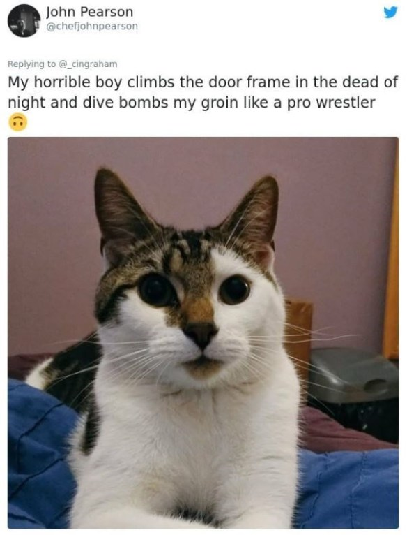 Cat - John Pearson @chefjohnpearson Replying to @_cingraham My horrible boy climbs the door frame in the dead of night and dive bombs my groin like a pro wrestler