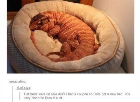 Cuisine - emaciating: duel-styx: Pet beds were on sale AND I had a coupon so Guts got a new bed. It's very plush he likes it a lot