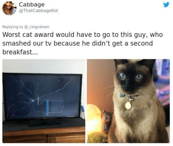 Cat - Cabbage @ThatCabbageKid Replying to @_cingraham Worst cat award would have to go to this guy, who smashed our tv because he didn't get a second breakfast...