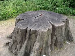 an actual stump