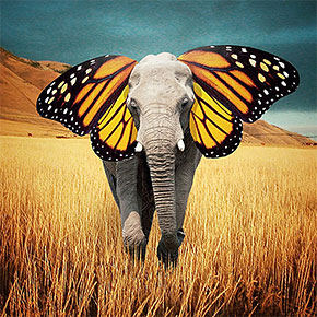 surreal elephant with butterfly ears