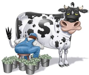 a literal cash cow