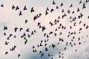 a-flock-of-birds-vocabulario-en-ingles-flock