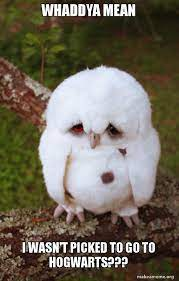 meme of a sad owl with the caption whaddya mean i wasn't picked to go to hogwarts?--vocabulario en inglés