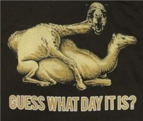 camels humping hump day