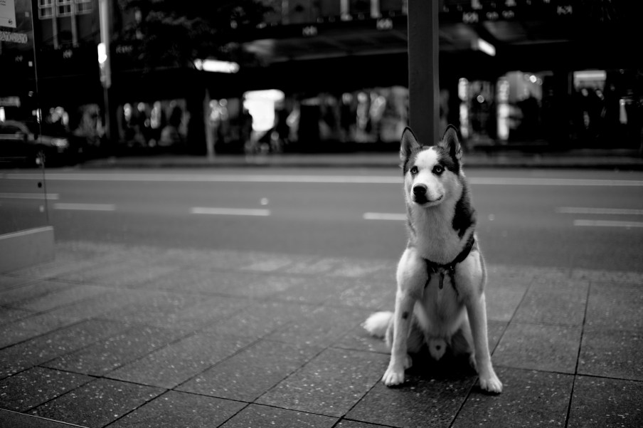 Leica M9-P with Zeiss 50mm Planar F2.