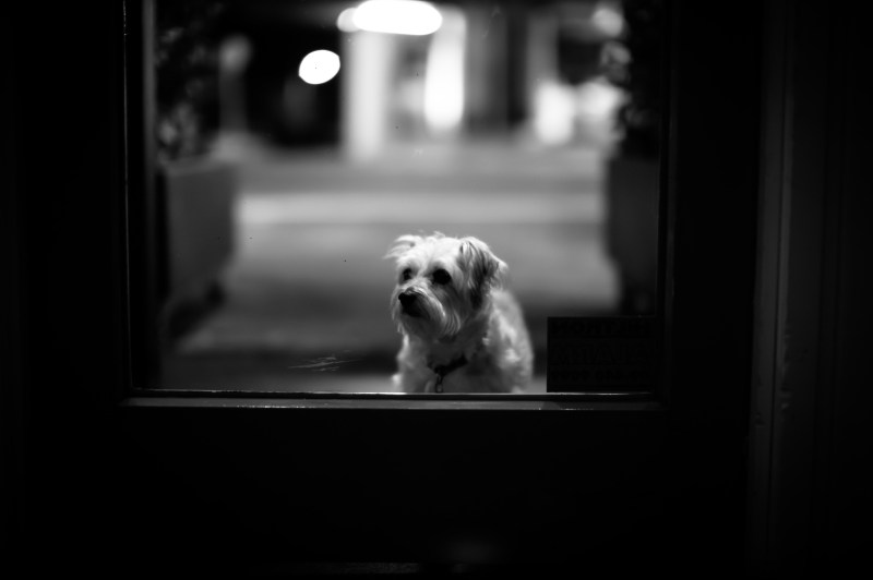 Leica M Monochrome with 50mm Noctilux 0.95