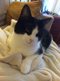 Joseph's Cat - Maggie