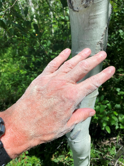 Rick Crandall with white Aspen powder on his hand