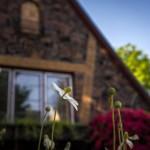 leaving-home-garden