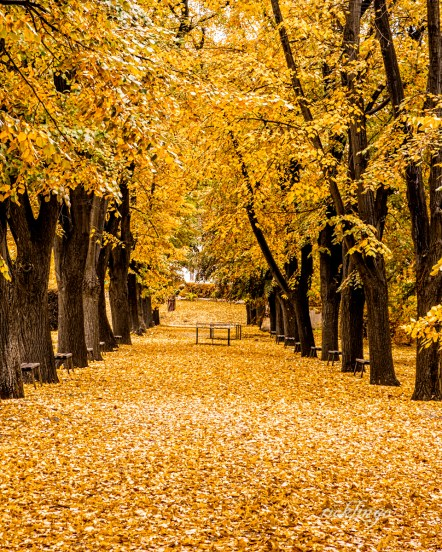 "Vidin, Bulgaria. 2nd place award in ""City, Street, and Parks"" and 3rd place in ""Leaf"" challenge on international website Pixoto."