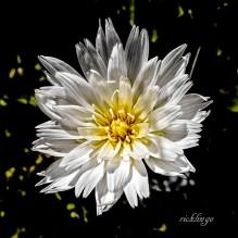 Spring Wildflower 2