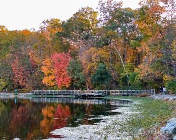 Autumn in Sharon Woods