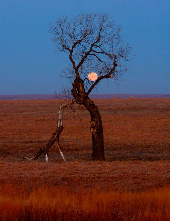 The Dinosaur Tree 2