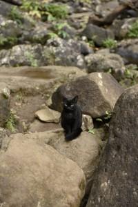 Hanakapiai Falls cat