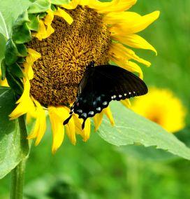 Sweet Nectary