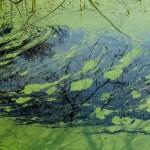 Green Ooze