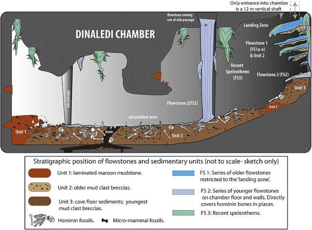 Cartoon_illustrating_the_geological_and_taphonomic_context_and_distribution_of_fossils,_sediments_and_flowstones_within_the_Dinaledi_Chamber