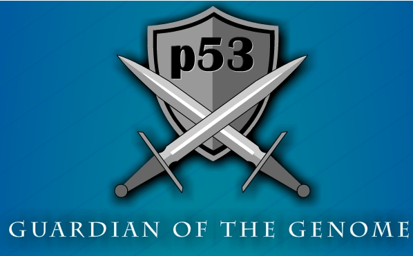 Infographic: P53- Guardian of the Genome