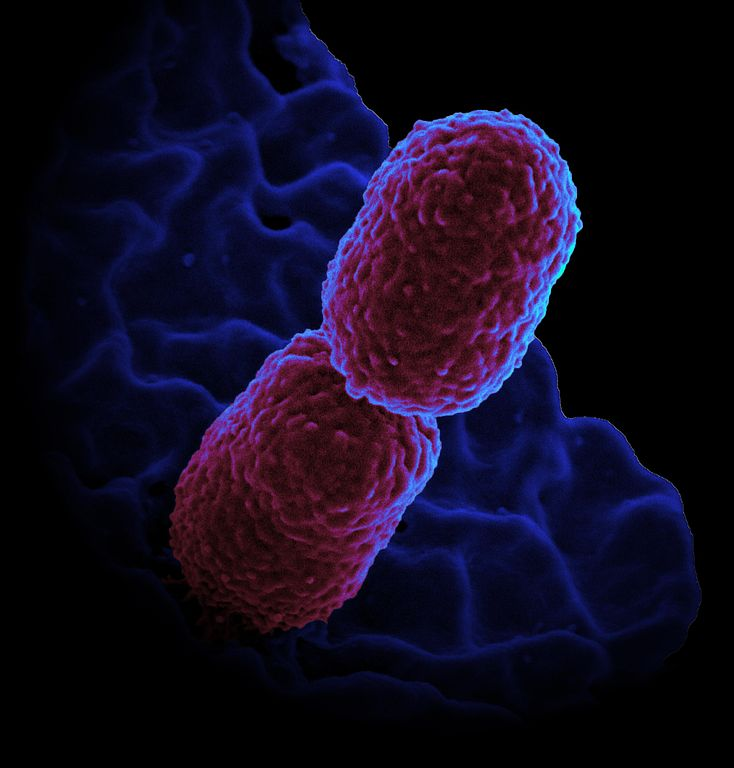 The Evolution of the Superbugs