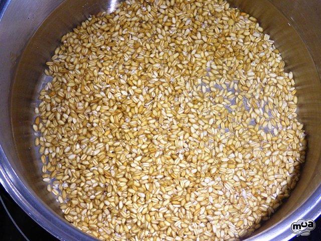 Ollica de trigo