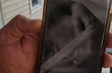 Madura dominicana Monica bethancourt desnuda