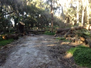 Tree Carnage at Palm Island Mount Dora
