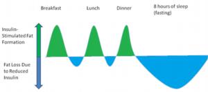fat-loss-diagram