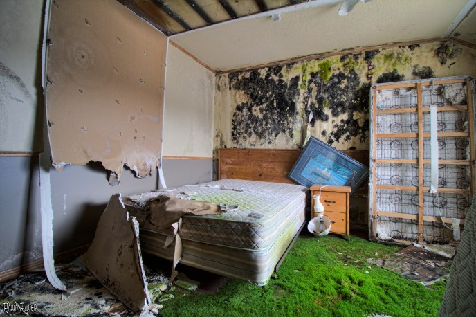 Moldy & moss filled room