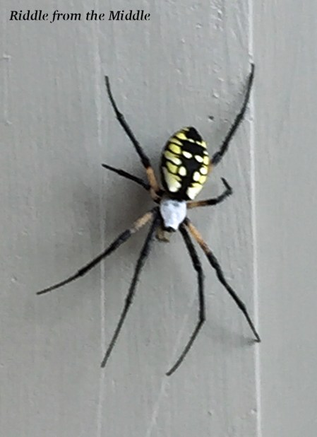 I found THIS right outside our back door recently. They tell me it's a friendly writing spider but still...