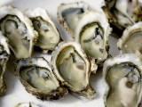 Iode et QI : Huîtres prêtes pour la dégustation
