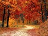 Météo : une Forêt en Automne, avec ses jolies nuances orangées