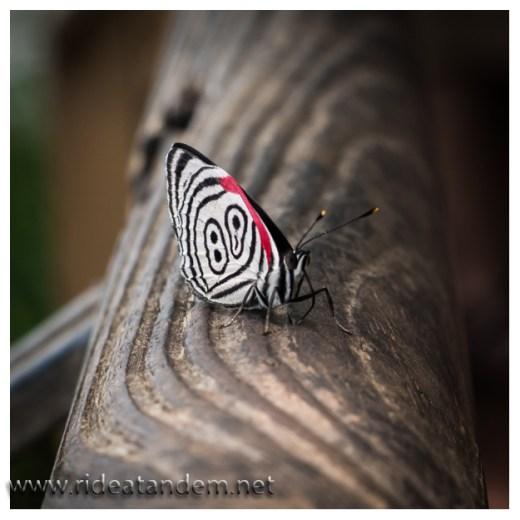 Es gibt auch eine wunderbare Tierwelt im Park zu beobachten, dafür waren wir aber eigentlich nicht gekommen ;-)